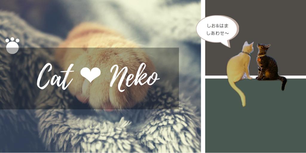 ネコのこと 猫写真 ネコスタグラム